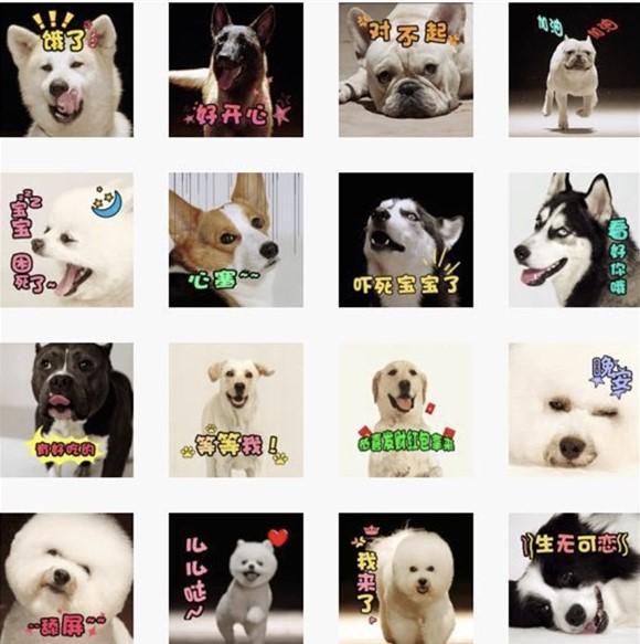 """《营救汪星人》11罗汉犬""""狗情包""""狗年走红"""