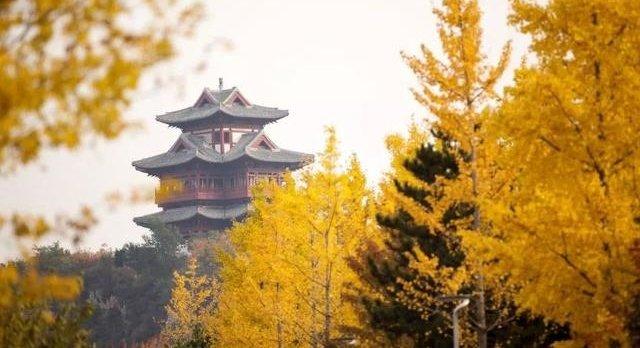 """寻找北京最美银杏林,这几个地方值得""""打卡"""""""