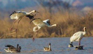 沈阳法库?#24213;?#27934;国家湿地公园已进入最佳观鸟季