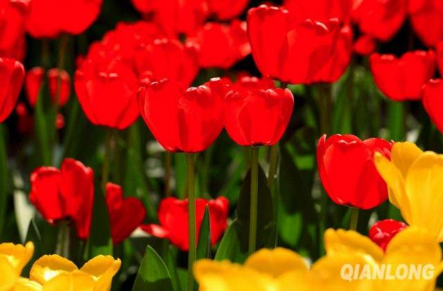 春暖花开了 2017年北京最全赏花攻略地图