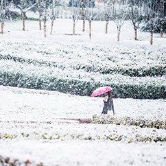 大光圈影友晒2015北京第一场豪华大雪