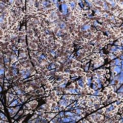 今日大光圈:分享春色的妖娆