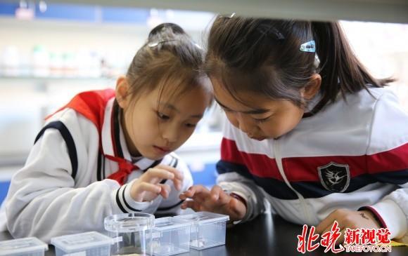 北京小学v规程规程出台:学前班被禁止班上不超多少小学北京图片