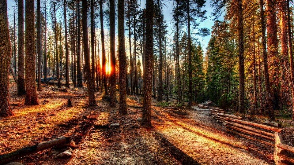 """""""国际森林日""""重庆100多处森林旅游地免费开放"""