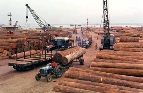 美媒:中国仿古家具需求旺 非洲红木走私严重