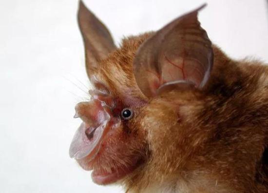 SARS病毒追击15年 在云南洞穴找到病源蝙蝠