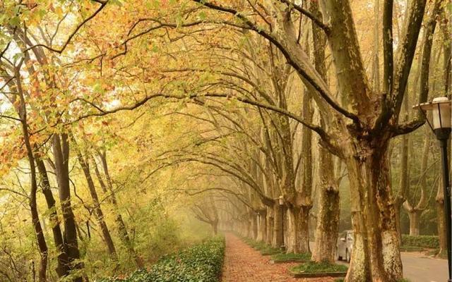 举世无双一座城 每到秋天这个六朝古都美成诗