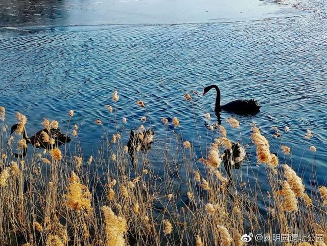 【图赏】圆明园风光:冬日暖阳 酝酿希望