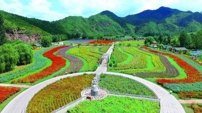 十万亩农田花海环绕京城