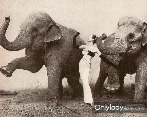 壁纸 大象 动物 510_408