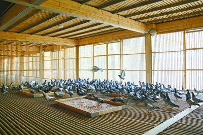 园博园为市民建信鸽寄养所