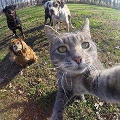 这只会自拍的猫掌镜拍下了它和它的狗狗伙伴