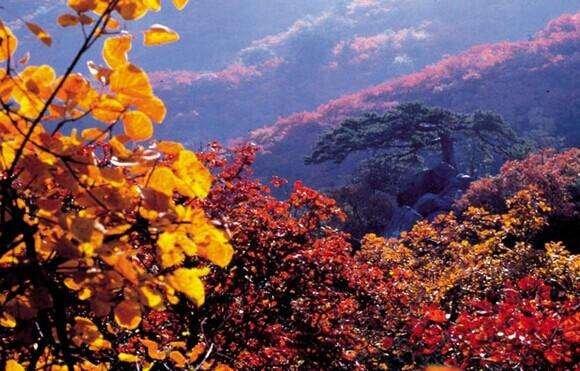 北京出行赏红叶:10月底香山游客最为集中