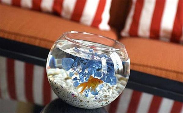 """金普顿酒店连锁推出了一项名为""""古比鱼之爱""""的服务,工作人员会根据顾客需要在客房内放一条观赏鱼。顾客也不用自己喂鱼,因为酒店会包揽一切工作。目前,美国和加拿大超过50处地区的金普顿酒店已开展这项服务。""""观赏鱼""""旨在使顾客获得更好的入住体验,抚慰旅行中的孤独情绪,减轻压力,特别是对出差在外的顾客来说格外受用。不出意外,金普顿酒店连锁也将在会议室和宴会厅摆设观赏鱼,营造更加舒适的氛围。"""