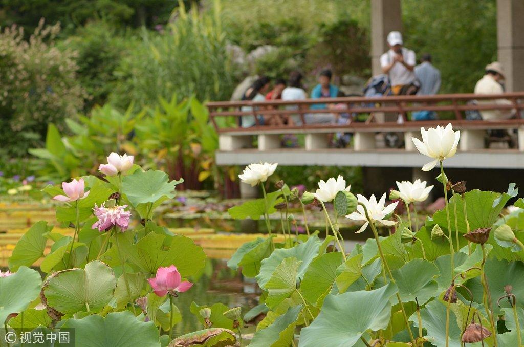 中科院植物园水生植物吸引游人