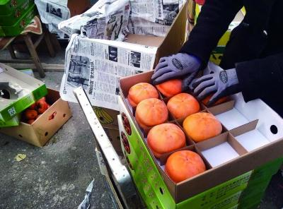外地柿变身房山大峪沟磨盘柿子 价涨三倍