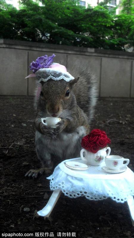 美社交障碍女生打扮野生松鼠 一夜爆红