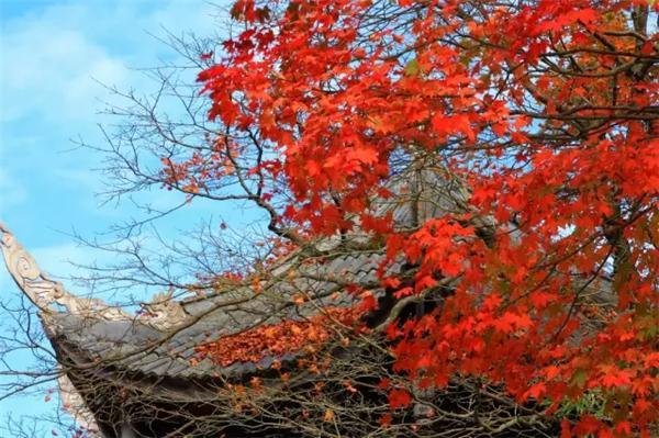 盛装峨眉 藏在金秋彩林里的佛世界