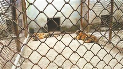 八达岭虎袭人事件申请异地审判被拒绝
