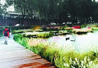 什刹海西海将建湿地公园