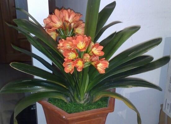 家里放什么花,才能让自己更加长寿?