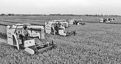粮食供给如何破解结构性矛盾 引农民跟市场走