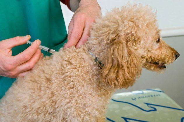 关注狂犬病防治:小小宠物带来大大隐患