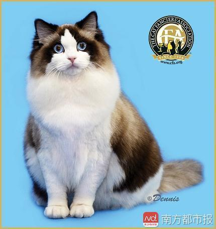 现金贷背后的欲望深渊:女子网上撸81只猫,欠下70万