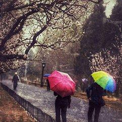 大光圈:北京第一场春雨来临 花落知多少