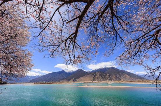 从婺源到丹寨,春天里,我们这样追逐花季