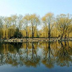 大光圈征稿出炉:溜进身边的北京的春色