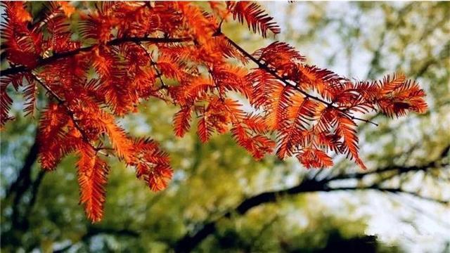 在北京植物园樱桃沟感受初冬的秋眷