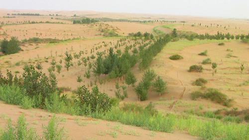 把沙漠变绿洲
