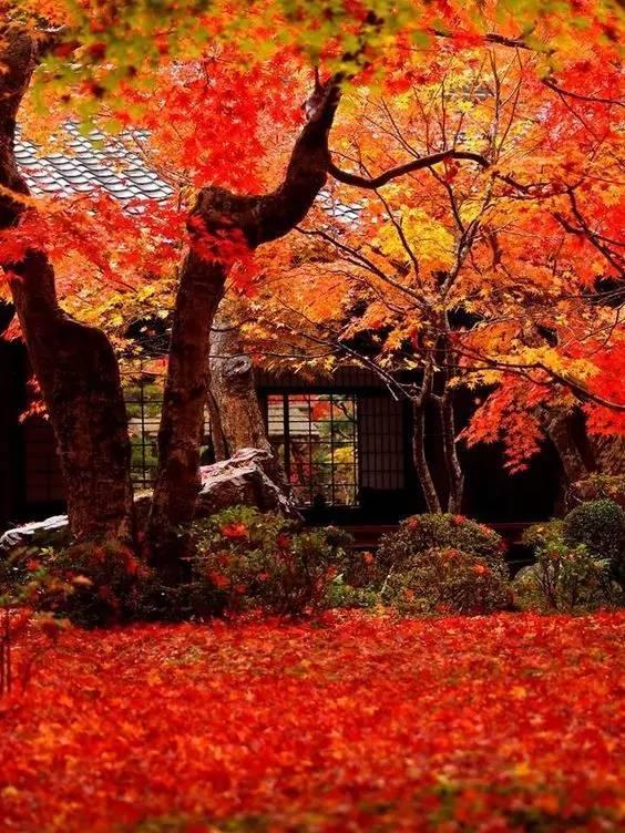 红叶狩 图片