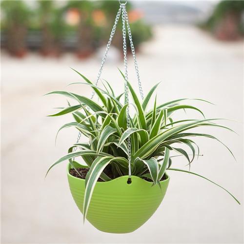 百科 | 适宜秋季摆放的植物