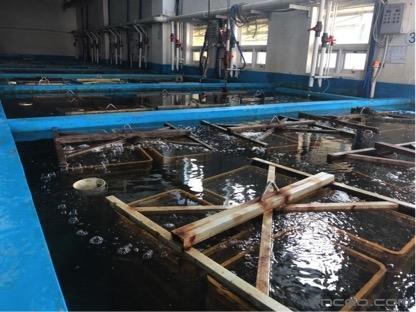 走进韩国水产文化,增氧水产创新知识