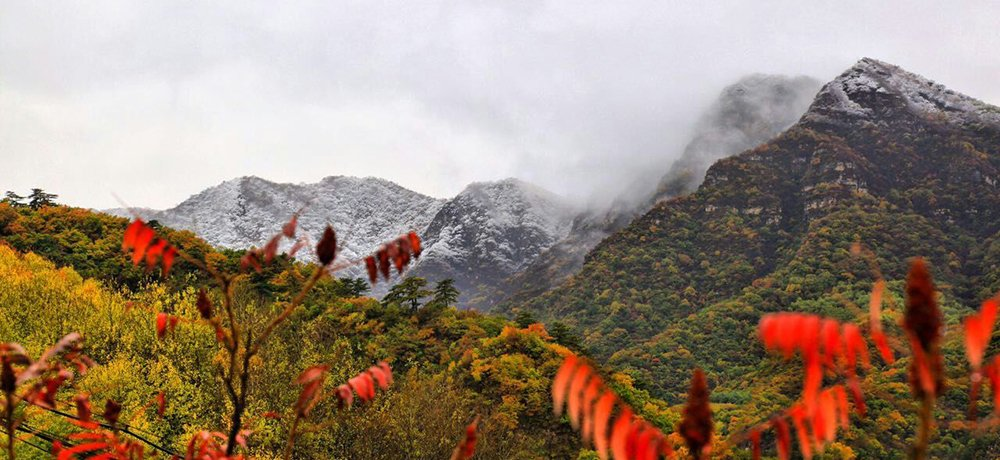 Lovely Contrast between White Snow and Red Foliage in Yanqing