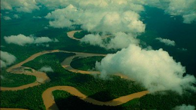 我们还会看到,一些西部低地猩猩以及刚果雨林最行踪莫测的神奇动物&