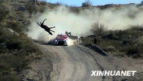组图:拉力赛赛车撞飞马匹 车手惊魂再撞车