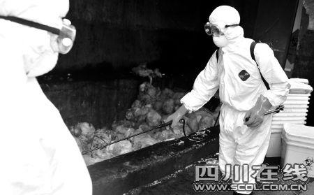 焚烧炉停工7天致甲流垃圾成吨 高温焚烧成灰