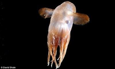 蛟龙号深海生物图片