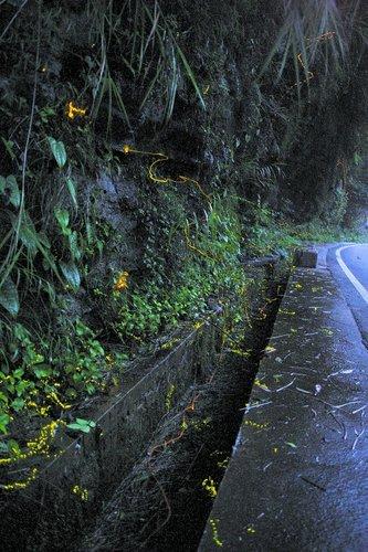 首次在四川峨眉山发现的中国第一种同步发光的穹宇萤
