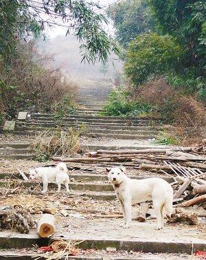 眉山彭山刘备墓开发工程 六七年前已叫停
