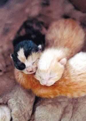 公猫生下3只小猫