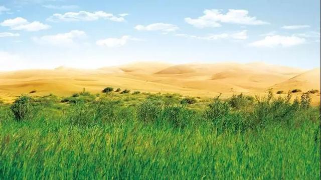 免费去沙漠看绿洲 和奶牛近距离接触