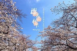 超霸道东京樱花季攻略 还有热门景点游玩要点)