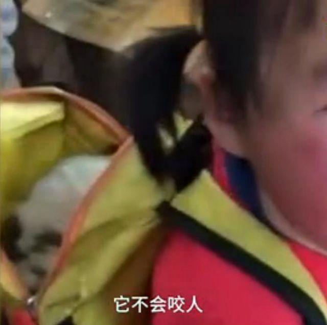 遂宁留守儿童书包藏小狗被发现 边哭边说:它不会咬人