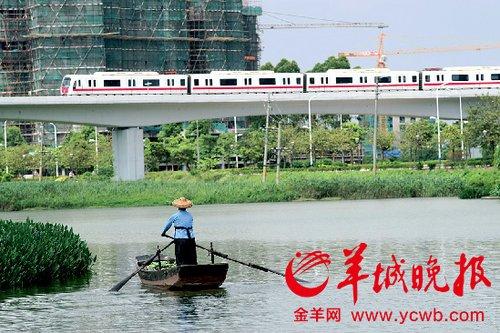 南沙蕉门河,渔民划着小船归家。地铁在高架路上奔跑,远处是正在兴建的楼盘。记者 宁彪/摄