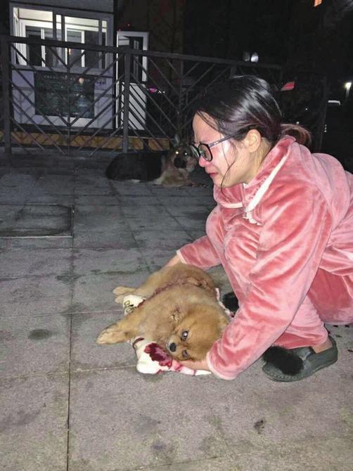 小区物业养狼狗咬死宠物犬 狗主人索赔1万元(图)