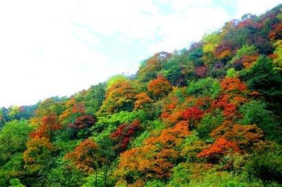 一静一动观西岭红叶 多种套餐优惠等你来